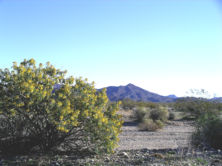 The sunlight makes the far off mountains look blue, and even part of the desert sand.  A bush is on the left.